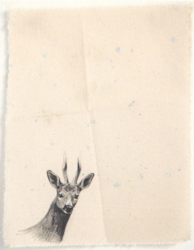 CHEVREUIL, 30 x 22 cm