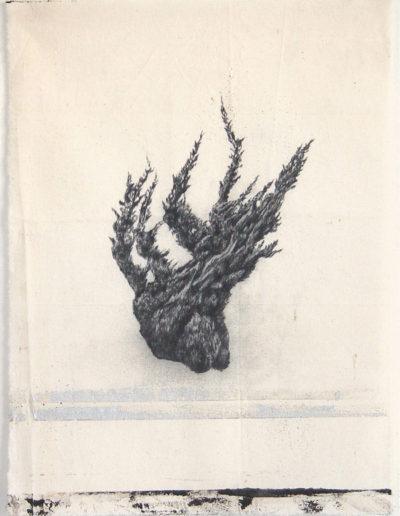 CYPRÈS,  53 x 39 cm.