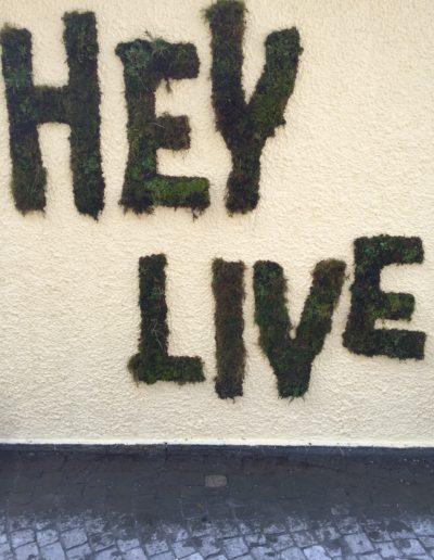 We Sleep-Hey Live